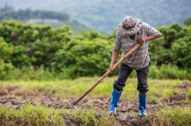 Atualmente há 95 mil produtores rurais associados ao Sicoob e somente 33% contratam crédito para viabilizar seus negócios. - Foto: Freepik/Divulgação